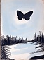 ヒマラヤ杉と蝶