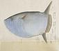 翻車魚一種[フクロフグ]
