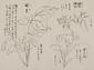 日光山艸木花鳥図画帖 3 模写「姫石楠木、岩千鳥、婿菜」『日光山志』第4巻より