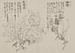 日光山艸木花鳥図画帖 5 模写「栂桜、岩澤瀉」『日光山志』第4巻より