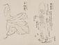 日光山艸木花鳥図画帖 8 模写「肉従容、白根葵」『日光山志』第4巻より