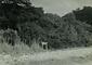 蓋井島「山ノ神」の森
