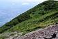 後方羊蹄山の高山植物帯