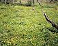 鯉ヶ窪湿生植物群落