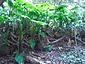 室戸岬亜熱帯性樹林及海岸植物群落
