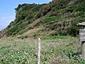 辰の島海浜植物群落