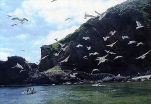 飛島ウミネコ繁殖地 とびしまうみねこはんしょくち