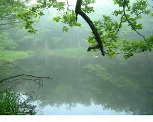 平伏沼モリアオガエル繁殖地 へぶすぬまもりあおがえるはんしょくち