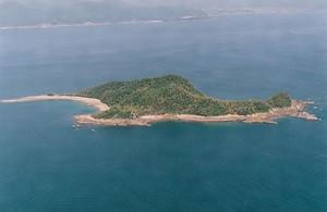 枇榔島亜熱帯性植物群落 びろうじまあねったいせいしょくぶつぐんらく